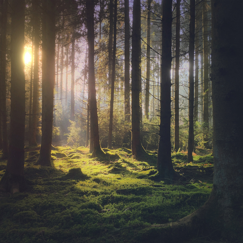 Image of sun shining through trees in a forest.