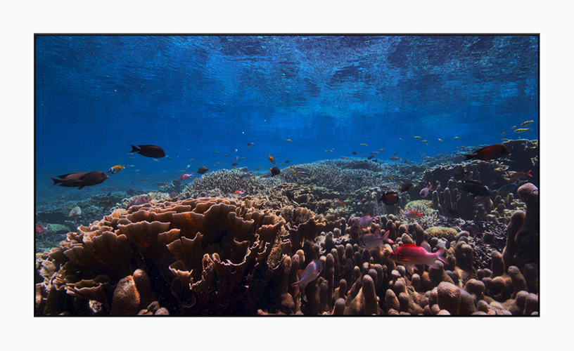 New 4K HDR screen saver displaying underwater marine life.
