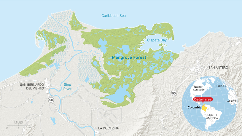 Map of the mangrove forest in the Cispatá marine protected area in Córdoba, Colombia.