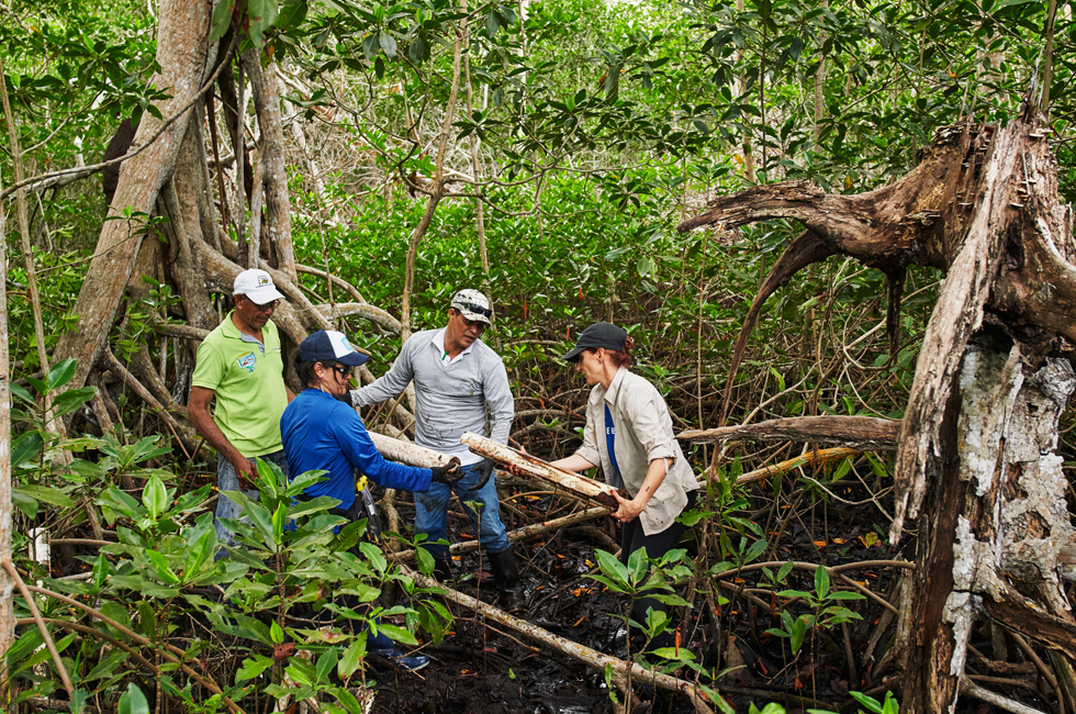 Field workers in a Colombian mangrove.