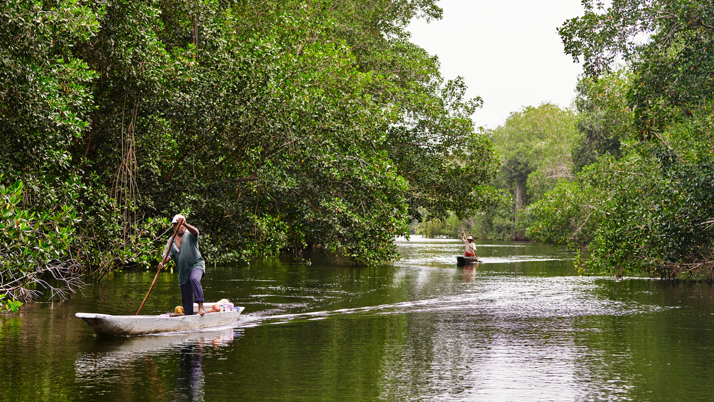 Two people steer their boats in a mangrove forest in Colombia.