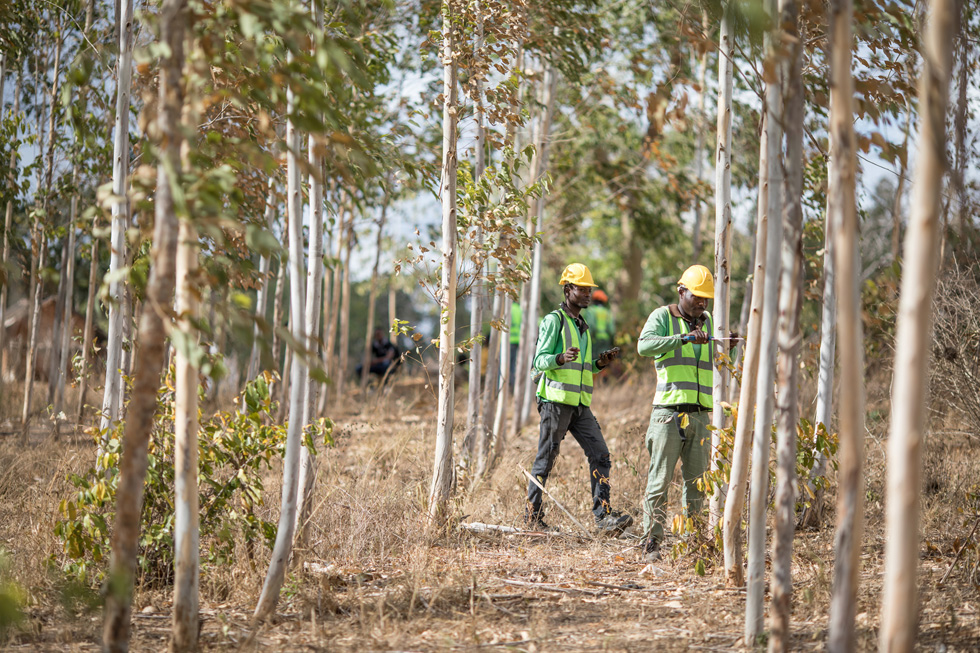 Two workers in a forest in Kenya.